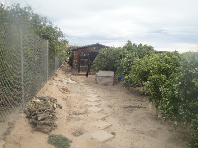 finca with orange trees close to Salinas